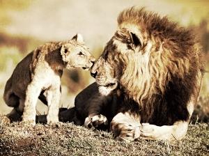 lions_zps71eae2e8