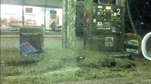 Mayflies invade the Mid-West: A gas station is enveloped in Minnesota.