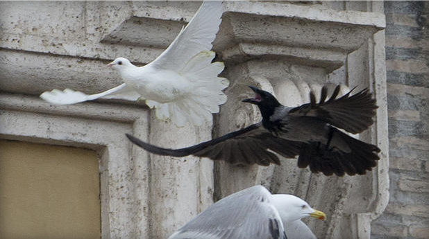 1-26-2014: VATICAN CITY - Two white doves that were released by children standing alongside Pope Francis as a peace gesture have been attacked by other birds. As tens of thousands of people watched in St. Peter's Square on Sunday, a seagull and a large black crow swept down on the doves right after they were set free from an open window of the Apostolic Palace. One dove lost some feathers as it broke free from the gull. But the crow pecked repeatedly at the other dove. It was not clear what happened to the doves as they flew off. While speaking at the window beforehand, Francis had appealed for peace in Ukraine, where anti-government protesters have died.