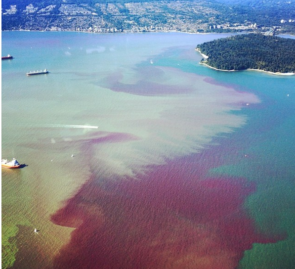 7-11-2014:  Vancouver is known for its stunning views of towering mountains and clear blue water, but this week things went a shade morbid. Water in parts of Burrard Inlet and English Bay turned as blood red as Lady Macbeth's darkest dreams. Authorities say the change in water colour is the result of algae blooms, according to Global News. John Parker-Jervis, a spokesman for the Port Authority, told the Vancouver Sun that there have been no reports of an oil spill or any other unfortunate event that might have discoloured the water.