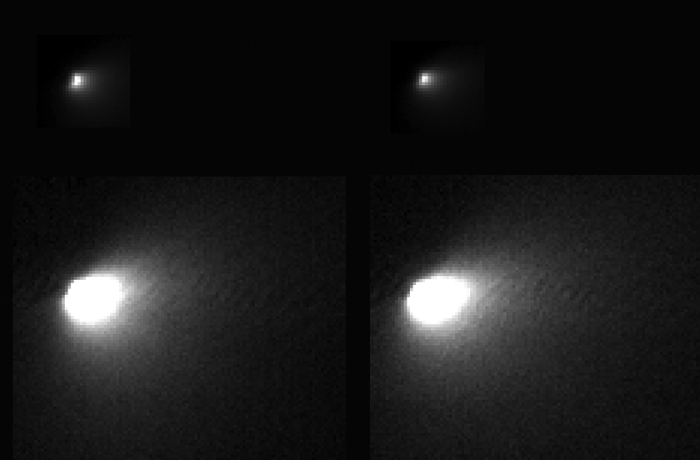 """10-19-2014:  Oort Cloud comet Siding Spring made its closest pass to Mars and the Mars Reconnaissance Orbiter (MRO) on Sunday, 19 October 2014. The highest-resolution images were acquired by HiRISE at the minimum distance of 138,000 kilometers. The image has a scale of 138 meters per pixel. Telescopic observers modeled the size of the nucleus as about 1 kilometer wide. However, the best HiRISE images show only 2-3 pixels across the brightest feature, suggesting a size smaller than 0.5 kilometers for this nucleus, the first ever imaged for a long-period comet. This composite image shows two of the best HiRISE images of the comet. Shown at top are images with the full dynamic range, showing the nucleus and bright coma near the nucleus. Shown at bottom are versions where the fainter outer coma is brightened, saturating the inner region. These closest-approach images were made possible due to very precise pointing and slewing of the MRO spacecraft by engineers at Lockheed-Martin in Denver, based on comet position calculations by engineers at JPL. HiRISE acquired three images 12 days before closest approach, when the comet was barely detectable above the """"noise level"""" of the images. These early images showed the comet was not quite at its predicted location! This new viewing angle on the comet was used to update its predicted location and timing at closest approach. Without this update, the comet may have been outside the HiRISE image area in the best images. Written by: Alfred McEwen Credit: NASA/JPL/University of Arizona"""